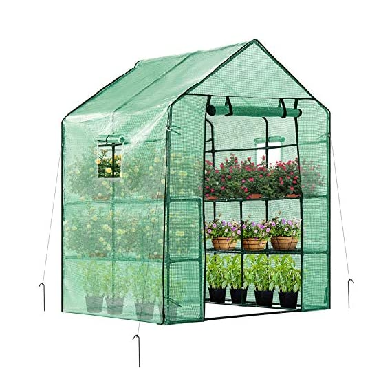 Vivosun 57x57x77-inch mini walk in green house with window and anchor plant garden hot house 2 tiers 8 shelves 1 multi-shelves, large space- crafted with 8 wired shelves, overall dimension:57x57x77-inch, our vivosun green house is large enough for starting seed, sprouting young plants, blooming flowers and cultivating fresh vegetables; 3 tiers and different height between each shelf provide a possibility to grow both small and large plants side by side roll-up entrance & windows- zippered roll-up entrance at the front provides an easily access to the greenhouse and a bigger operating space; 2 side windows bring a better air circulation of the green house, even if in hot weather, your lovely plants can breath fresh air; and the custom meshes on the window effectively isolate the pests from harming plants high-quality & long life time pe cover- our vivosun greenhouse is double-stranded edge banding, making the cover more tough and more durable; thanks to the anti-cold agent added in the cover, its lifetime is 3 months more than usual cover; in addition, our high-quality pe cover can prevent the harm from uv and bad weather but offering the best solar performance, which will nourish your plants very well