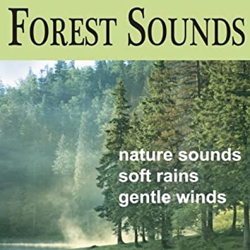 Forest Sounds: Soft Breezes, Songbirds, Rains, Sounds of Nature, Echoes of Nature Sounds