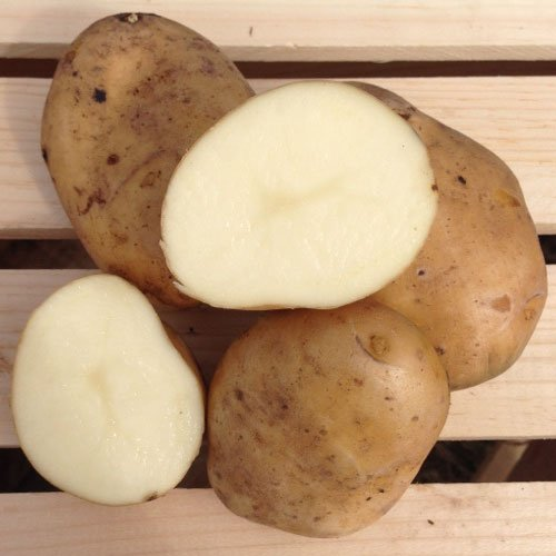 Kennebec Seed Potatoes, 5 lbs. (Certified)