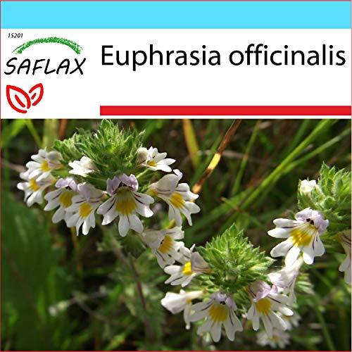 SAFLAX - Geschenk Set - Heilpflanzen - Augentrost - 200 Samen - Mit Geschenk- / Versandbox, Versandaufkleber, Geschenkkarte und Anzuchtsubstrat - Euphrasia officinalis