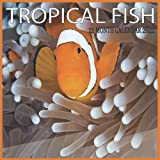 TROPICAL FISH 12 Month Calendar 2022: 12 Month Mini Calendar from Jan 2022 to Dec 2022, Cute Gift Idea   Pictures in Every Month