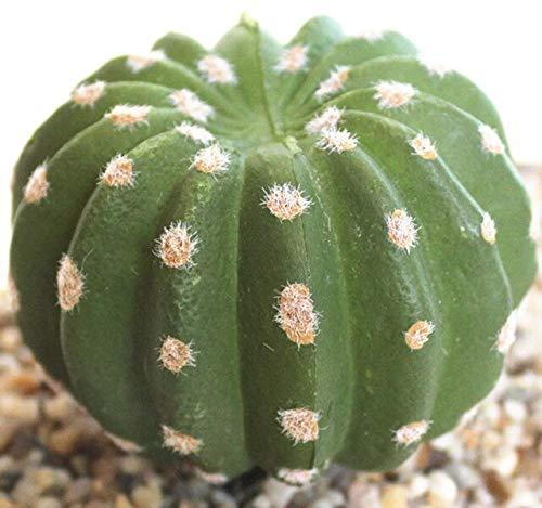 N / A Kunstpflanze 1 Stück grüne glückliche Bambus künstliche Pflanze Büro Hotel/Hochzeitsfeier Familie Tischdekoration künstliche Blume B.