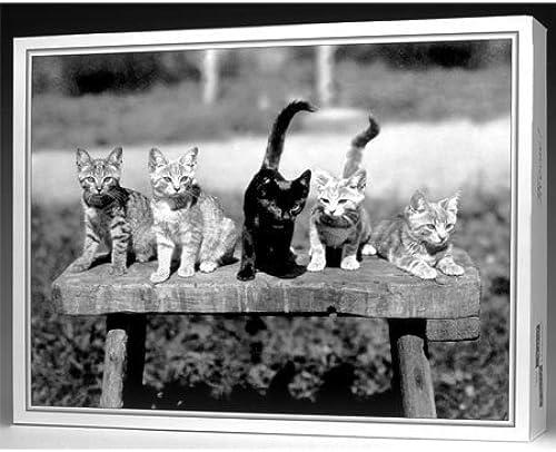 The Nice Card Company Meow 500 Piece Jigsaw Puzzle by The Nice Card Company