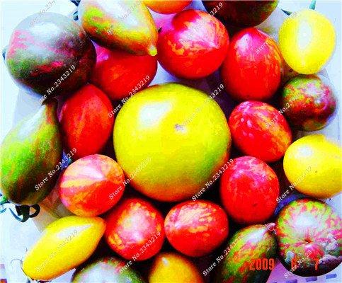 Saint Fruit Tomate Graine tomates cerises bricolage jardin domestique, Bonsai Fruit Légumes Anti-âge Terrasse Cour 200 Pcs 1