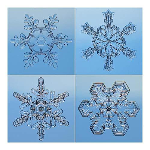 Global Gallery Kunstdruck, Motiv Schneeflocken auf Mikroskop-Papier 20In x 20In