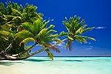 PALMEN Fototapete VLIES-400x260 cm (5052A)-Natur Landschaft Strand Meer Dünen Bäume Karibik...