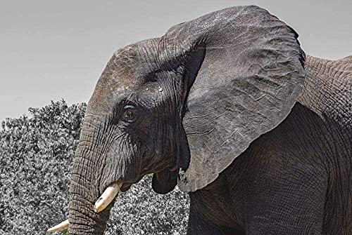 Zanne di elefante Cinque Grandi Mammiferi del Parco Nazionale di Puzzle per Adulti Da 1000 Pezzi,Puzzle in Legno per il Gioco con la Famiglia Collezione Gioca Gioco Educativo,Arte della Parete,Arreda