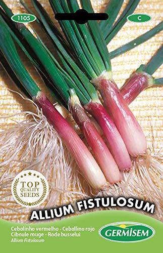 Germisem Allium Fistulosum Semillas de Cebollino Rojo 2 g, EC1105