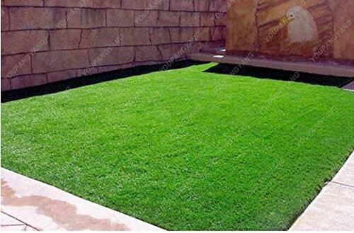 500pcs/Sac Graines de gazon, Golf Graines de catégorie spéciale Evergreen gazon, Terrains de soccer, Villa, fleurs de haute qualité Jardinerie plante
