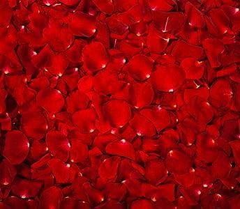 Pétalos de Rosa Rojos Confeti. Flores De Seda Románticas De La Sentir. día de San Valentín. Hojas Rojas (2000)