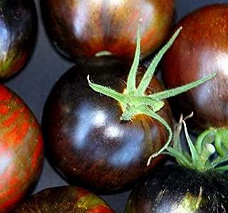 Seeds Cosmic Eclipse Tomato Seeds Get 10 Seeds #PAJ01YN