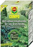 COMPO Antiamarronamiento de coníferas de larga duración, Para todo tipo de coníferas y plantas de hoja perenne, 1 kg