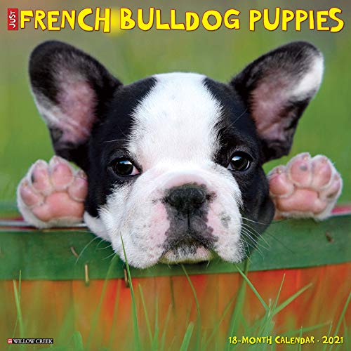 Just French Bulldog Puppies 2021 Wall Calendar (Dog Breed Calendar)