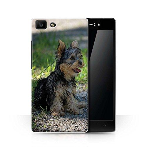 Handy Hülle kompatibel mit Oppo R5 Beliebter H&/Eckzahn Rassen Yorkshire Terrier/Yorkie Transparent Klar Ultra Dünne Handyhülle Hülle Cover