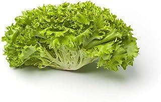 Lettuce Lolo Biondo Holland | Healthy & Nutritious | Sweet & Tender | Slightly Bitter Flavor | Velvety Texture | Premium Q...