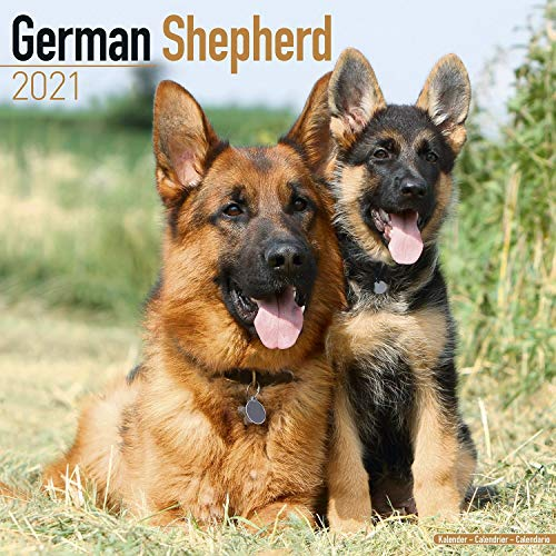 German Shepherd Calendar 2021 - Dog Breed Calendar - Wall Calendar 2020-2021