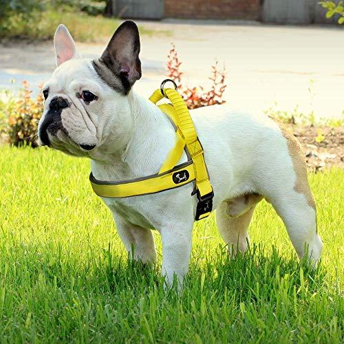 Louvra Hundegeschirr Mesh Brustgeschirr für Hunde Atmungsaktiv Vest Geschirr Reflektierend Einstellbar Weich Geschirr Sicher Kontrolle für Welpen Kleine Mittelgroße Große Hunde - Gelb XS