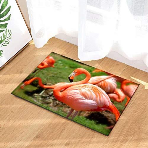 N-brand Alfombras De Puerta.Alfombra Interior.Ducha Alfombras De Entrada De Baño Alfombras Felpudo,Entradas De Piso,Felpudos Antideslizantes,40X60Cm.Flamingo Junto Al Lago.