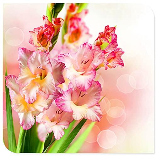 Gladiolus |Kann verschenkt werden...
