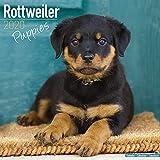 Rottweiler Puppies ? Rottweiler Welpen 2020: Original Avonside-Kalender [Mehrsprachig] [Kalender] (Wall-Kalender) - Avonside Publishing