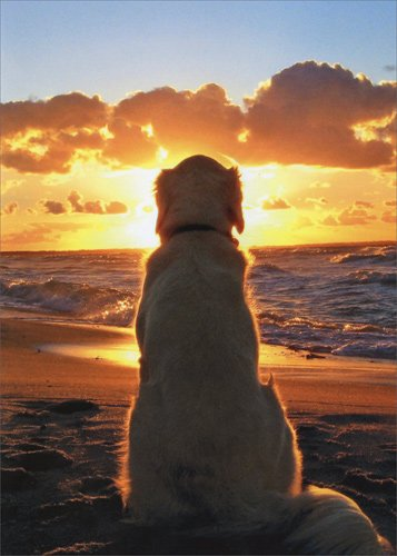 Dog Sitting On Beach At Sunset - Avanti Golden Retriever Pet Sympathy Card by Avanti Press