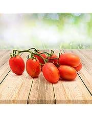 Tomatos Unique