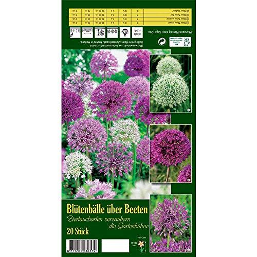 Florado 20x Zierlauch Blumenzwiebeln `Blütenbälle über Beeten`, Garten, Blumen Schnittblumen Zwiebelblumen, Bienen Insekten Hummeln, Größe 10/12