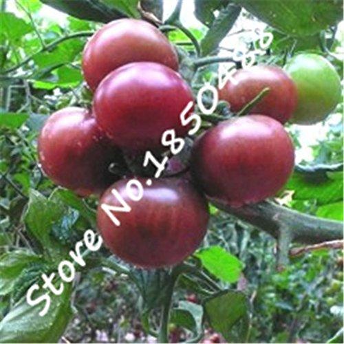 SVI 100 pcs/sac Perle Noire Graines de tomates, Rare ~ exotique ~ nourrissant d'antan Fruits Arbre de tomate Graines, fruits et légumes Bio Graines