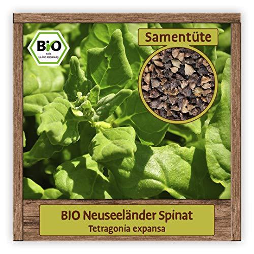 BIO Neuseeländer Spinat Samen (Tetragonia expansa) seltene historische Salat Sorte mehrjährig