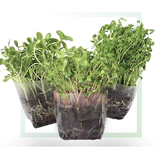 Window Garden Assorted Indoor Microgreens Seed Starter Vegan Growing...