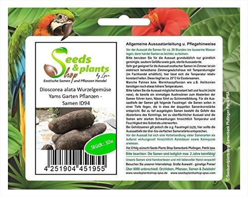 Stk - 10x Dioscorea alata Wurzelgemüse Yams Garten Pflanzen - Samen ID94 - Seeds Plants Shop Samenbank Pfullingen Patrik Ipsa