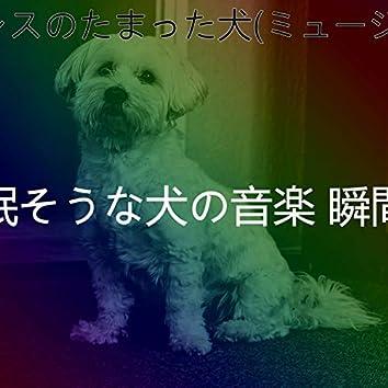 ストレスのたまった犬(ミュージック)