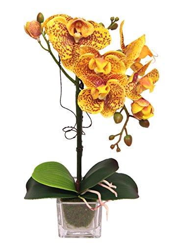 Flair Flower Phalaenopsis im Glas, Stoff, gelb, 35 x 15 x 10 cm
