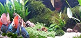 Mühlan Wasserpflanzen Sortiment für Diskus, südamerikanische,...