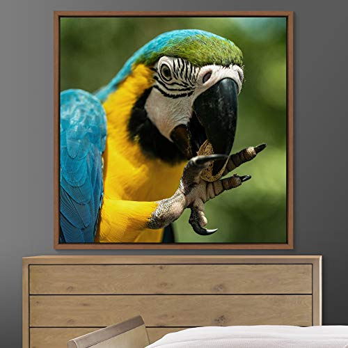 """bestdeal depot Bright Bird Framed Canvas Wall Art Prints for Living Room,Bedroom Framed Artwork Decoration Ready to Hang - 16""""x16"""" inches"""