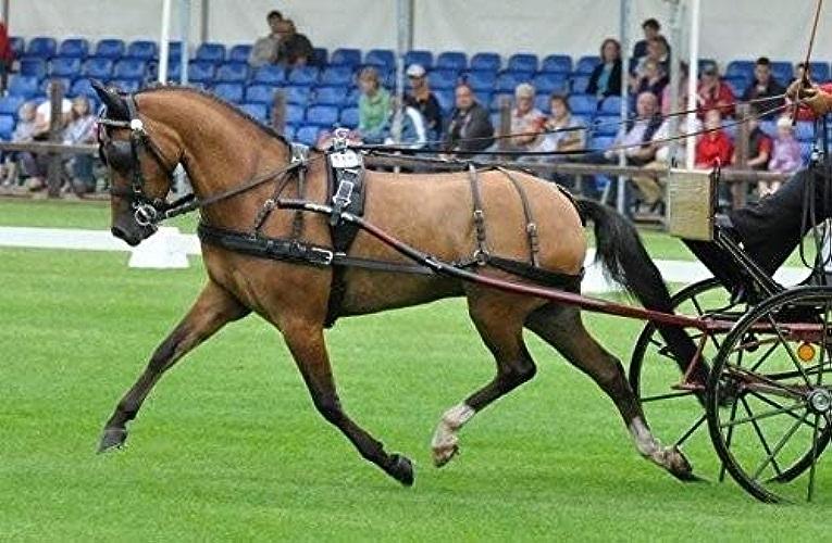Harnais Lux cuir renforcé nylon Ideal - cheval, brun, inox, antidérapantes, à dé, bracelets de brancards