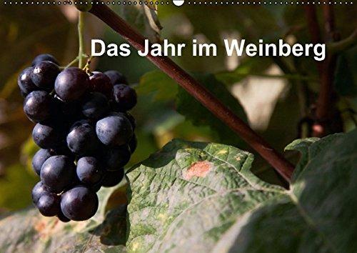 Das Jahr im Weinberg (Wandkalender 2016 DIN A2 quer): Arbeit im Weinberg (Monatskalender, 14 Seiten ) (CALVENDO Natur)