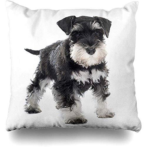 Funda de cojín Schnauzer Miniatura Cachorro Negro Frente Blanco Perro Mascota Cojines Fundas de Almohada Decoración para el hogar 45X45cm Funda de cojín Cuadrado