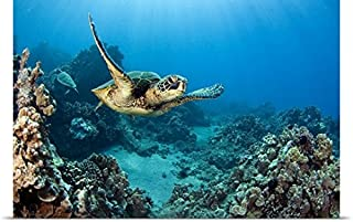 GREATBIGCANVAS Entitled Hawaii, Green Sea Turtle an Endangered Species Poster Print, 30