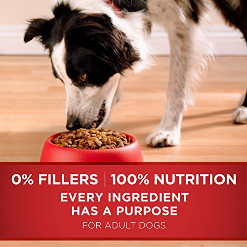 Dog | Purina ONE Natural Dry Dog Food, SmartBlend Chicken & Rice Formula – 31.1 Lb, Gym exercise ab workouts - shap2.com