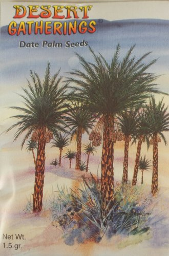 Date Palm Seeds – Plant Your Own – Contains...
