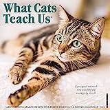What Cats Teach Us 2022 Wall Calendar