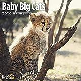 Bright Day 2020 Wandkalender für Baby-Katzen, 16 Monate, 30,5 x 30,5 cm, niedliche Dschungeltiere, Kätzchen, Löwe, Tiger