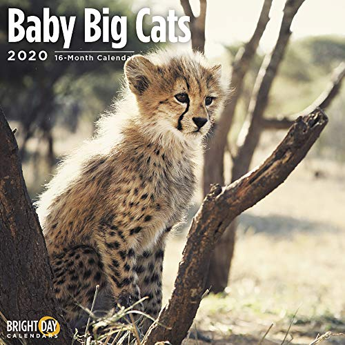 2020 Baby Big Cats Wall Calendar by Bright Day, 16 Month 12 x 12 Inch, Cute Jungle Animals Kittens Lion Tiger