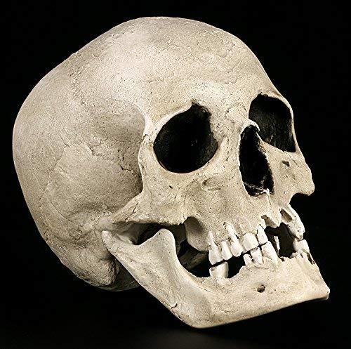 Totenkopf Replikat männlich anatomisch mit Unterkiefer - Figur