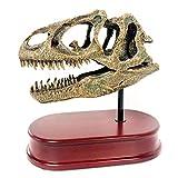 LUCKFY Allosaurus Schädel 6,5 Zoll Skala Replica Dinosaurier Die Zahlen für die wissenschaftliche pädagogische Spielzeug-Malerei Medical Teaching Learning Tool -