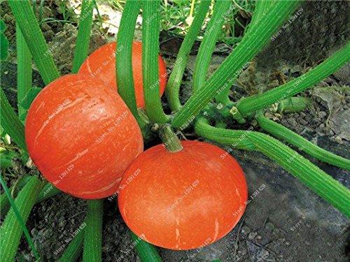 Graines de citrouille rares Cucurbita fil d'or de citrouille non-OGM légumes jardin Bonsai plantes ornementales semences Escalade 10 Pcs/sac 8