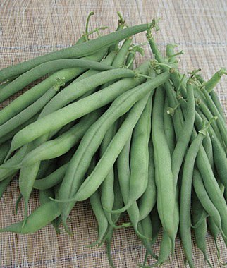 blue lake pole beans - 4