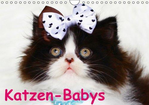 Katzen-Babys (Wandkalender immerwährend DIN A4 quer)