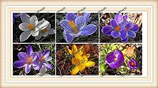 100pcs / bag narciso de flores, semillas de narcisos (no bulbos de narcisos) plantas bonsai semillas de flores acuáticas pétalos dobles para el jardín de